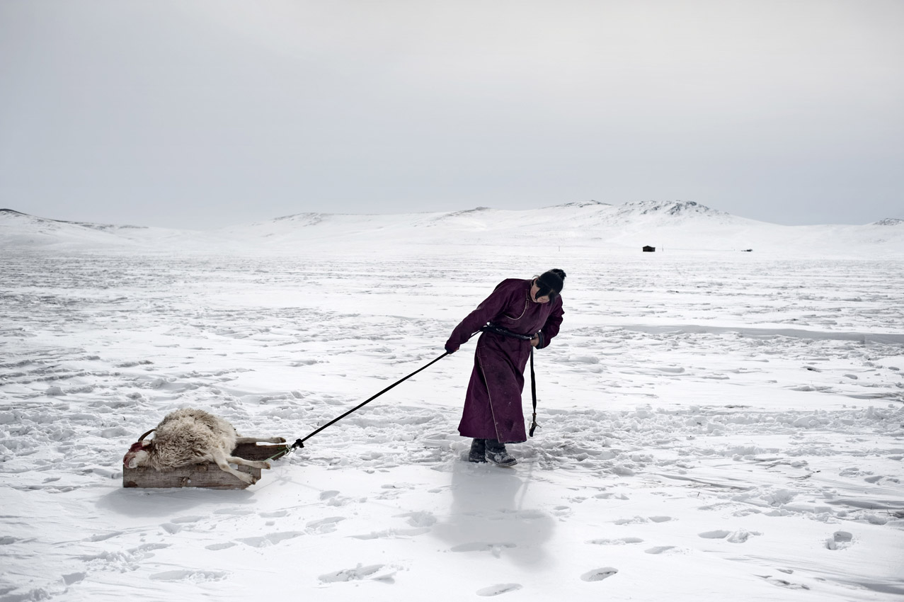 Environmental migrants: the last illusion. Ulaan Baator, Mongolia.